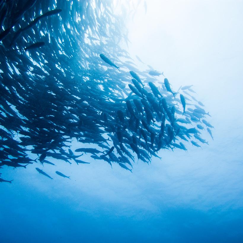 庄氏集团冰鲜鱼-海鲜产品-小程序开发案例说明