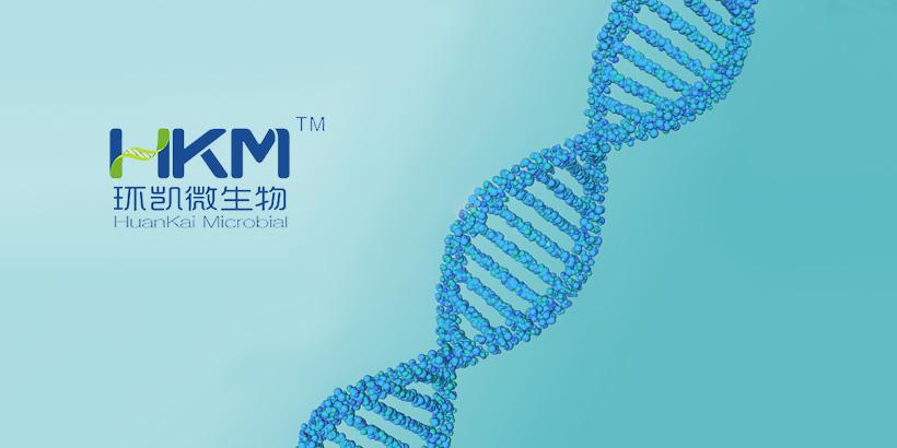 广州网站建设-环凯官网建设开发
