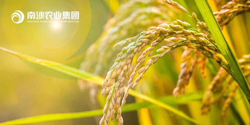 广州网站建设-南沙农业集团官网网站建设